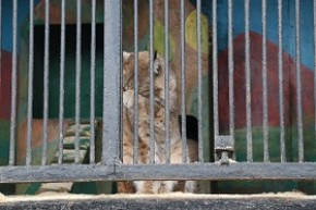 О результатах мониторинга мест содержания диких животных в неволе