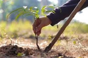 Более 2,5 тыс. деревьев и кустарников высадят в Витебской области в день озеленения