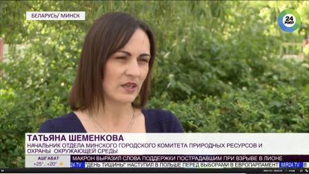 Опасные «зонтики»: как в Беларуси борются с борщевиком