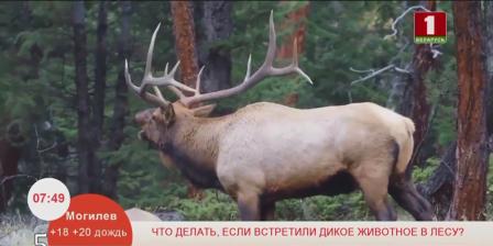Что делать, если вы встретили дикое животное в лесу?