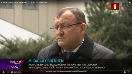 В Минской области начинают борьбу с борщевиком