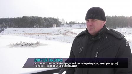 Жители Витебска беспокоятся о зимующих в городе лебедях