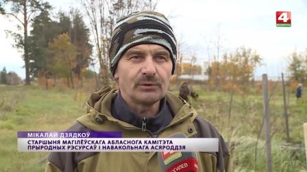 2300 деревьев высадили возле промышленной площадки №4 СЭЗ «Могилев»