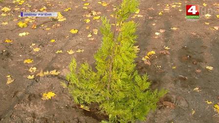 Озеленение Гродненской области