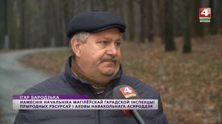 Печерский лесопарк в Могилёве получит статус особо охраняемой территории