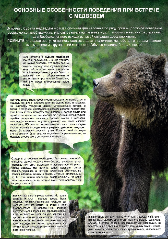 Основные особенности поведения при встрече медведем